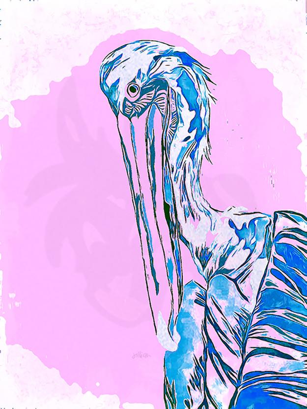 Mixed Media Canvas Print featuring a Pelican